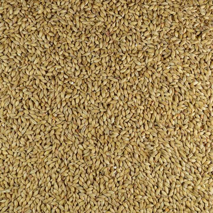 gladfield vienna malt